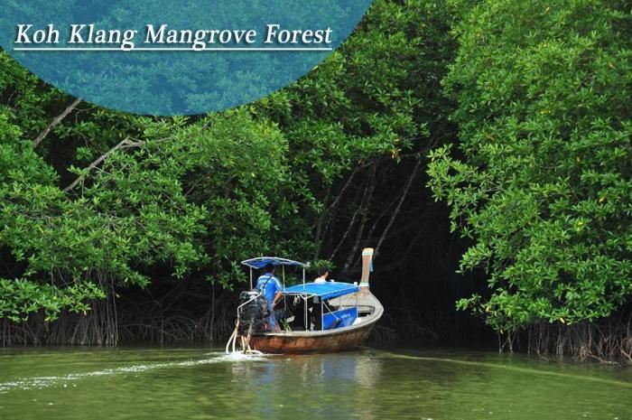 Koh Klang Mangrove Forest
