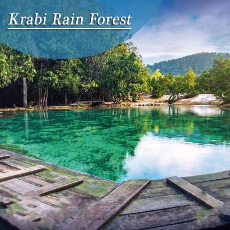 Krabi Rain Forest